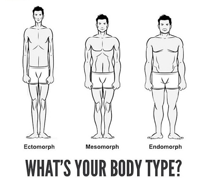 body type diagram