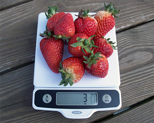 strawberries on food scale